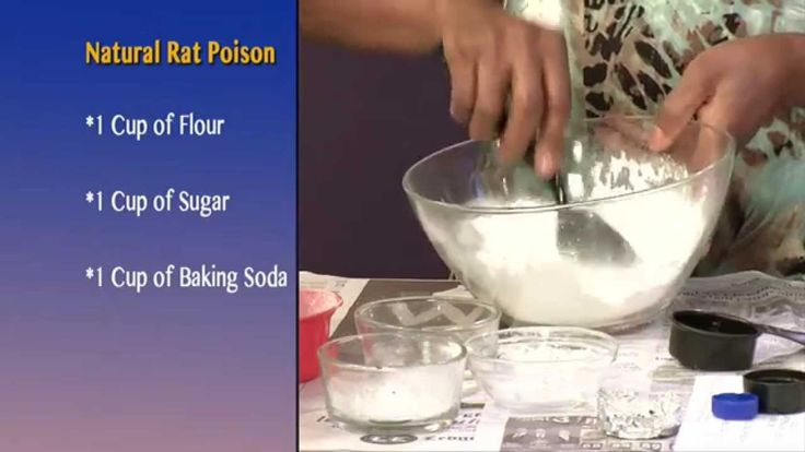 natural rat poison! 1 cup of flour, 1 cup of sugar, 1 cup of baking soda