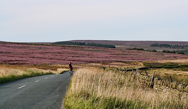 Yorkshire Moors With Heather In Bloom Research For Like Honey Saffron Nights 3