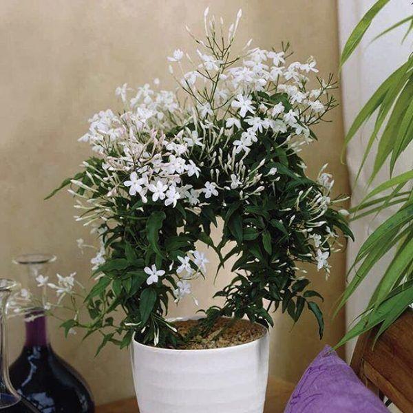 8 Pflanzen Dekorieren Die Kuche Die Produktivitat Geben Wird Zimmerblumen Schlafzimmer Pflanzen Zimmerpflanzen Ideen