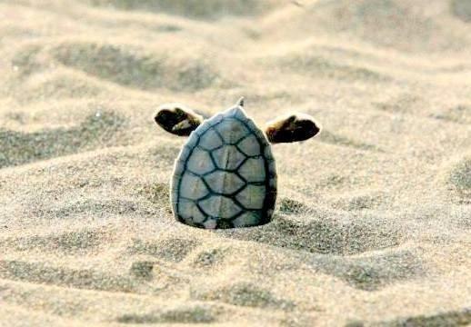68 best turtle images on pinterest fluffy pets turtles and animal your boss at work turtle with its head in the sand publicscrutiny Gallery