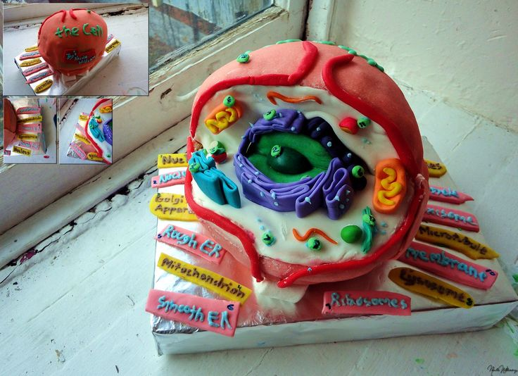 This is absolutely a stunning cake!! Art meets science! Biology Cell Cake