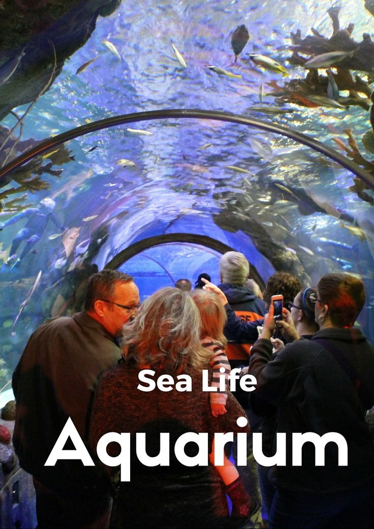 From Stingrays to Sea Turtles. Sea Life Aquarium in Minneapolis is great for all ages. Located in the MOA, this exhibit is the perfect thing to do on the weekends in the Twin Cities.