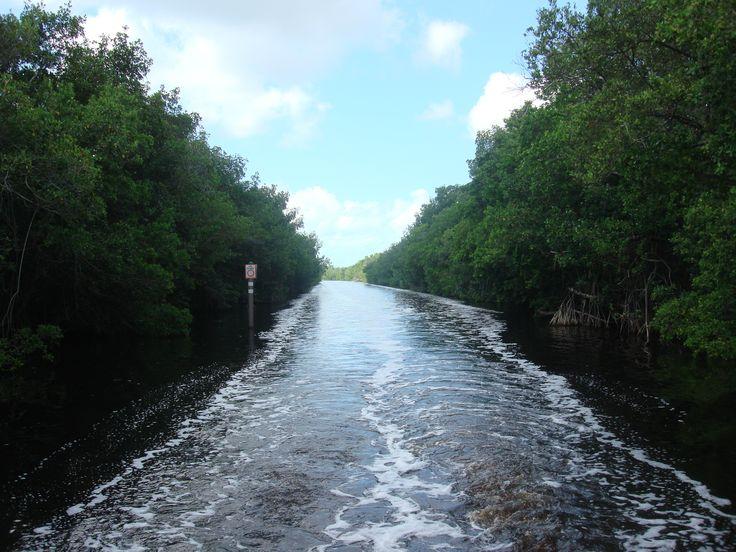 Everglades, Florida USA (2011)