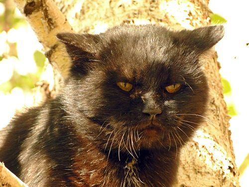 1000+ images about Black cat on Pinterest | Black Cats ...