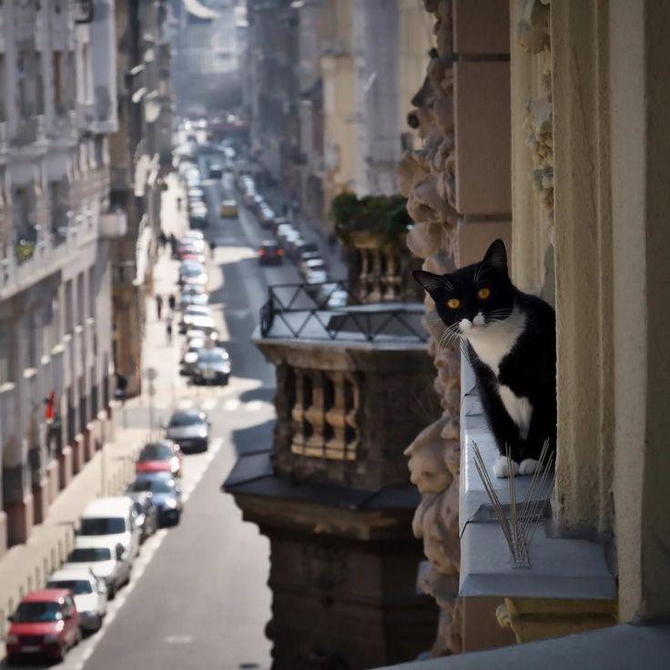 Hello from the other side  #cat #feline #cats #catsofinstagram #catgram #cateyes #catstagram #catwalk #catslowers #catlove #catlife #ilovemycat #lovecats #instacat #ilovecat
