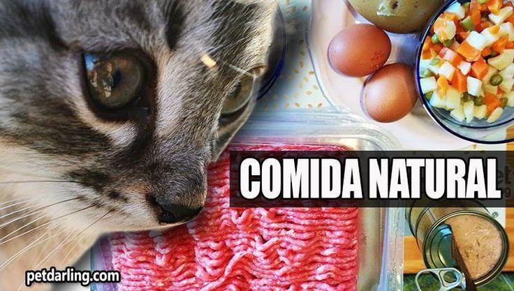 Como hacer comida casera para gatos, NATURAL sin suplementos. Aprende a preparar una comida completa para gatos, deliciosa, facil y sana, VIDEO-receta!