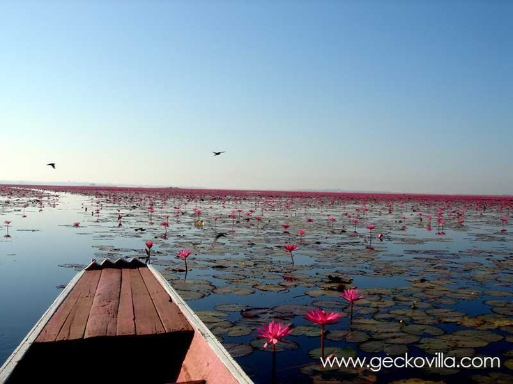 A boat trip in Gecko Villa's boat on the Red Lotus Sea in Thailand.
