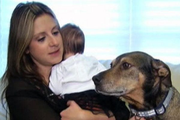 A Newborn Baby Was Dying...What This Rescue Dog Did Will Amaze You.  Thank God for our fur babies <3