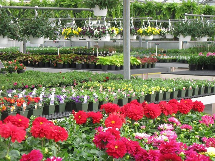 Pleasant Valley Greenhouse 2224 Pleasant Valley Rd Oakland Md Friday And Saturday April 25
