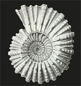 Digital File | Haeckel Ernst Ammonitida | TIFF printable file | Grayscale Ammonite Printable Poster