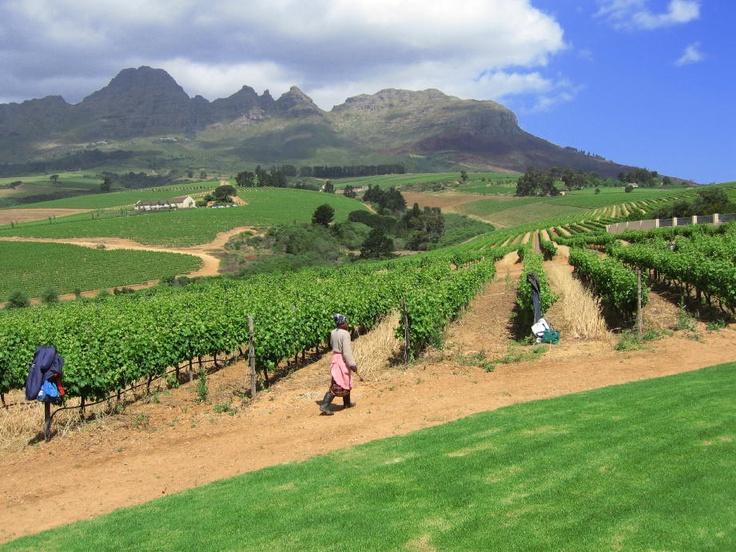 Wine Route - Cape Town