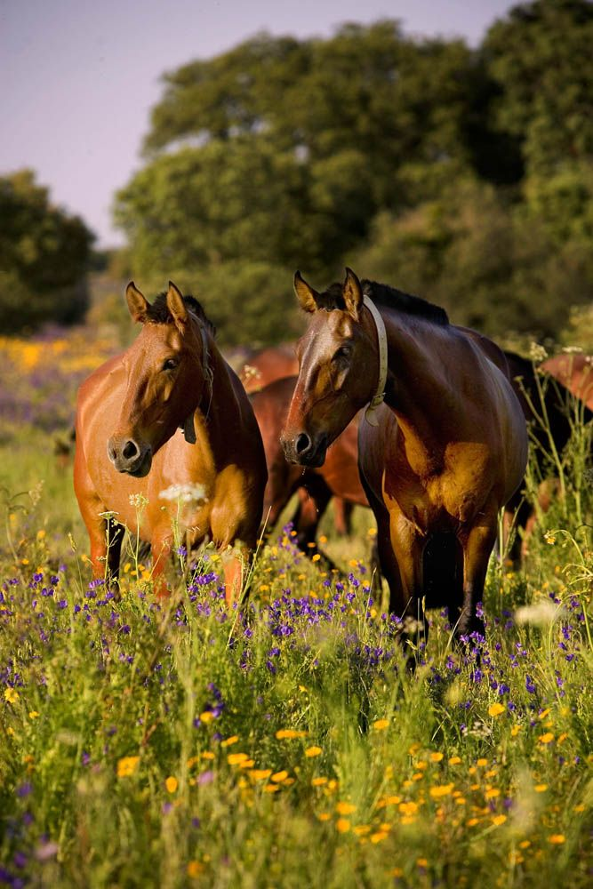 Alter Real mares. I love the flowers.