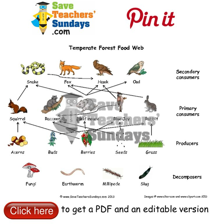 Food web. Go to http://www.saveteacherssundays.com/science/year-4/373/lesson-2-food-webs/ to download this Food web. #SaveTeachersSundaysUK