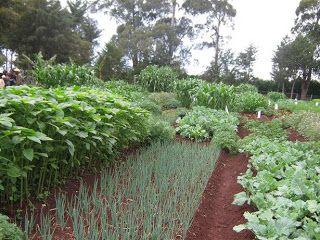 Grow Biointensive Gardening .