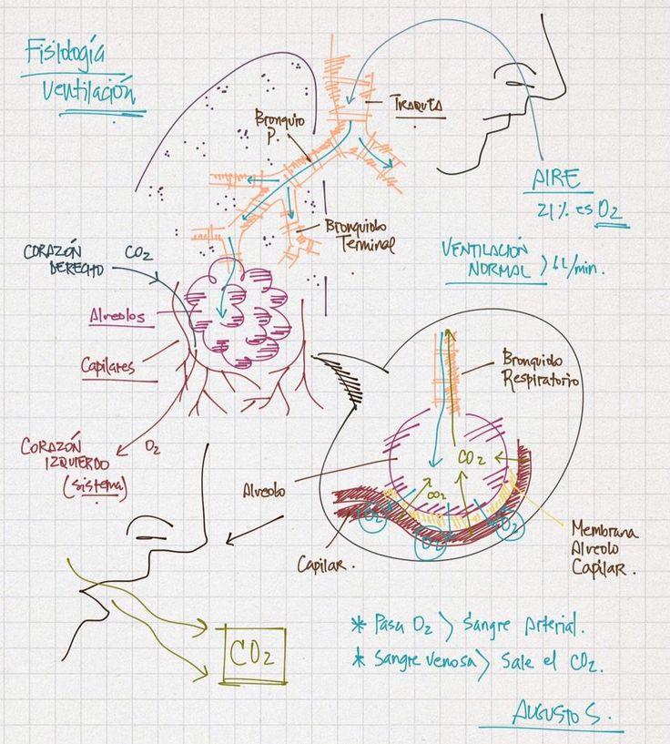 Fisiologia de la VENTILACION