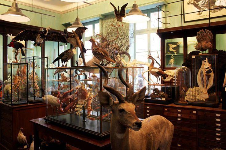 Cabinet de curiosités Deyrolle