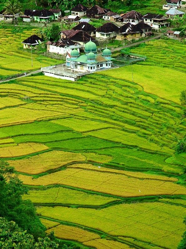Rice field at Bukit Tinggi, West Sumatra, Indonesia