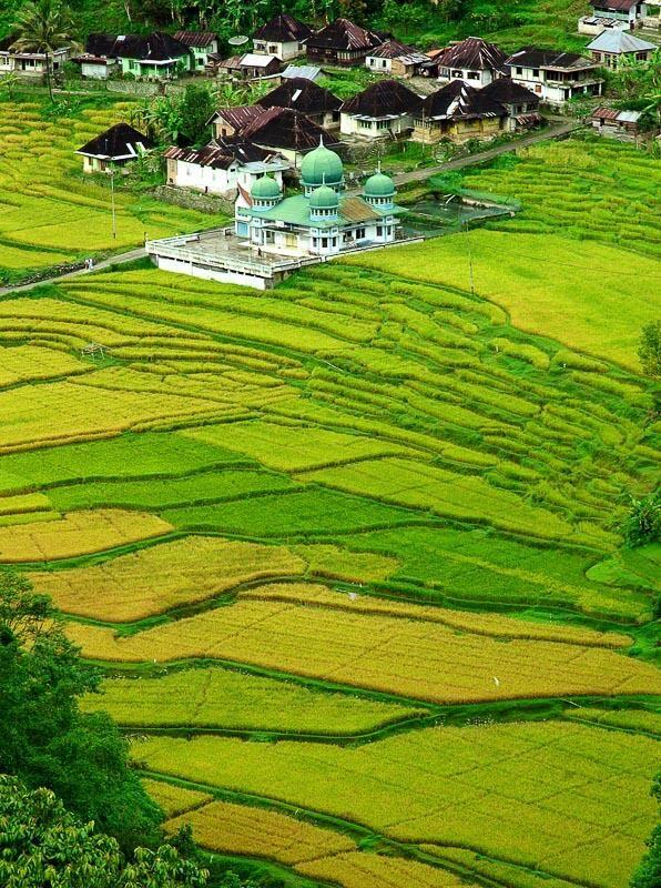 Rice field at Bukit Tinggi, West Sumatra, Indonesia