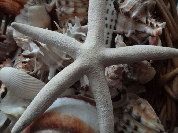 Free Images : sand, texture, flower, coastline, decoration, collection, tropical, aquatic, seashore, shellfish, fauna, starfish, invertebrate, life, seashell, conch, close up, mollusk, seashells, nautical, design, exotic, scallop, nautilus, seastar, macro photography, echinoderm, marine biology, marine invertebrates, cockleshell, star shell 4896x3672 -  - 1341025 - Free stock photos - PxHere