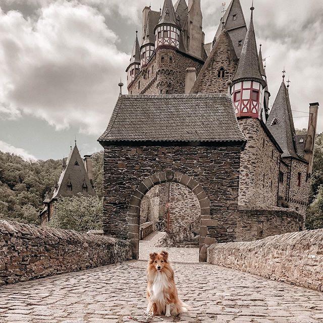 Bild Konnte Enthalten Himmel Hund Wolken Und Im Freien Regram Via Bxddmslnn3d Sommerfotos Instagram Bilder