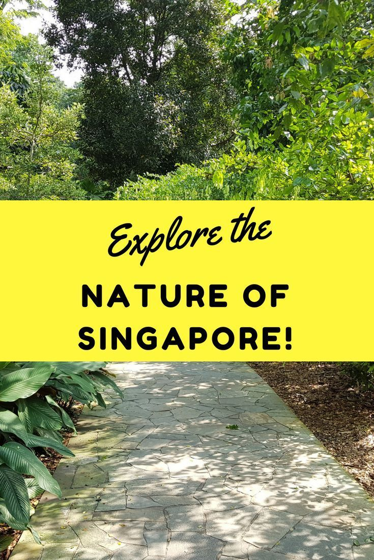 Explore The Nature Of Singapore With These Amazing Attractions Singapore Travel Singapore Walking In Nature