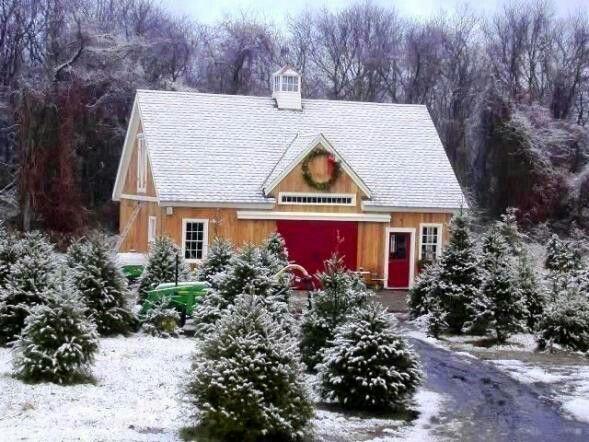 Yankee Barns Tiverton Rhode Island Clark S Christmas Tree Farm In 2020 Prefab Barns Yankee Barn Homes Barn House