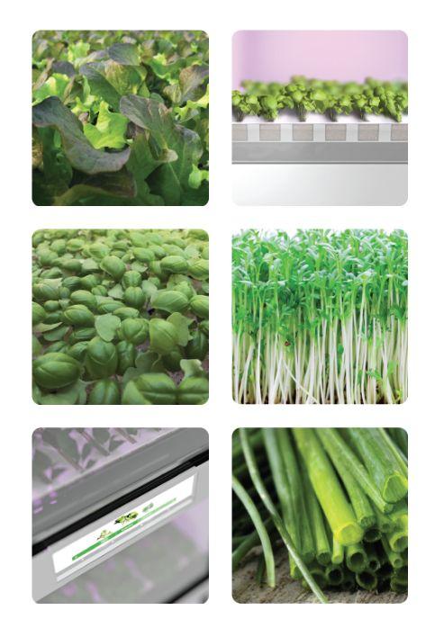 Tomatopiu crop. Discover which crop are available on www.tomatopiu.com #tomatopiu