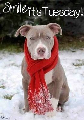 Smile Its Tuesday Quote With Pit Bull