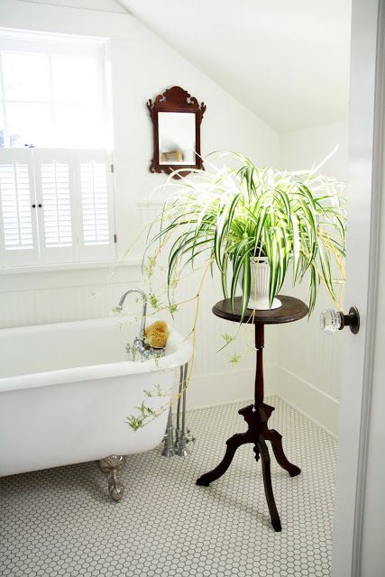 A country farmhouse love the spider plant indoor garden for Small bathroom plants