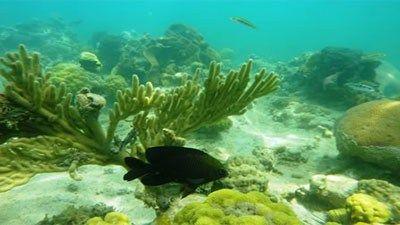 Under_water_diving_santmartin_island  http://www.ctgbarta24.com/archives/6219