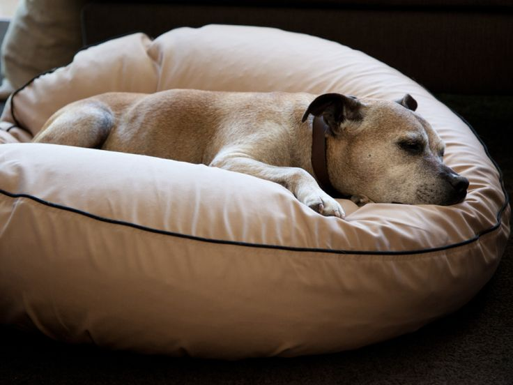 Barney streched out on his very comfy pet bean bed made by Barka Parka