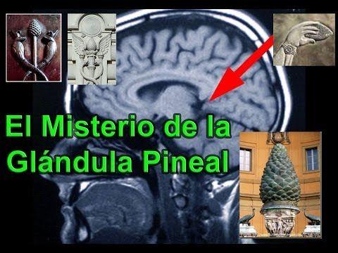Glándula Pineal, La Puerta de la Matrix - YouTube