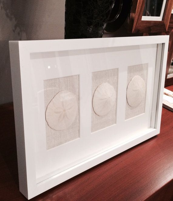 SAND DOLLAR ART 3 Framed in White Shadow Box by handpickedbysusan