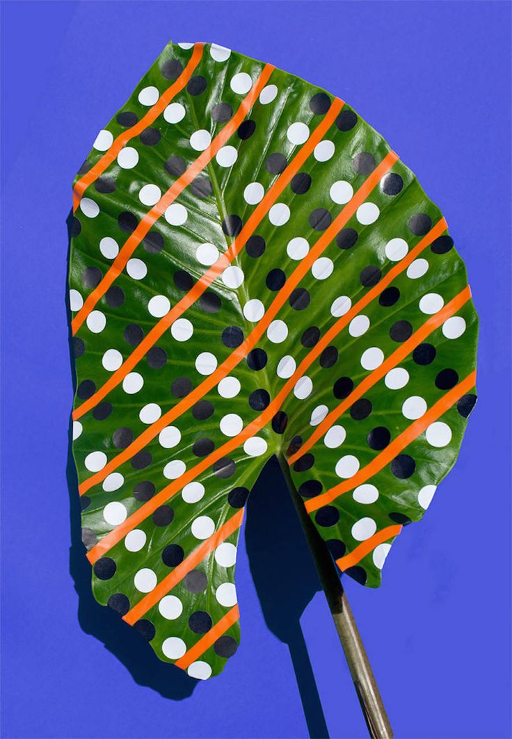 WONDERPLANTS DI SARAH ILLENBERGER #wonderplants #sarahillenberg #art