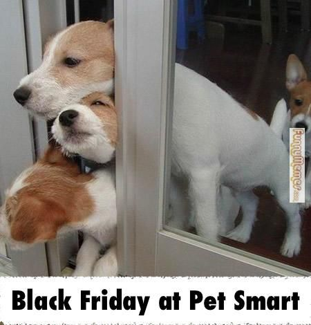 Forget shopping! Enjoy these funny Black Friday memes instead. Cute and funny Black Friday memes to make the season merry.
