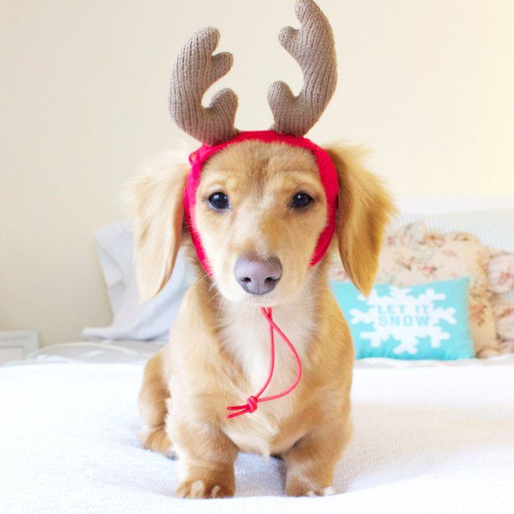 Weendeer* - http://www.becomingaphotographer.net/2452/weendeer/ #Christmas2014, #Puppeh, #Uncategorized