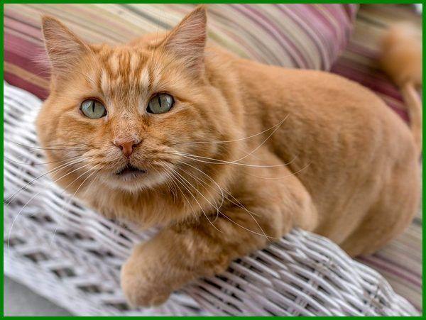 Daftar Nama Nama Kucing Korea Dan Artinya Daftarhewan Com Di 2020 Kucing Oranye Kucing Kucing Tabby