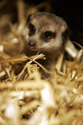 7 Best Images About Animals In Boots On Pinterest Baby