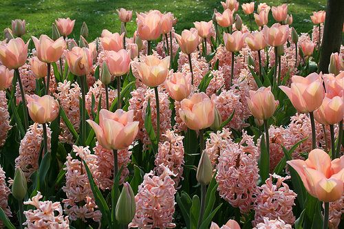 Monochromatic Tulip and Hyacinth in pale pink