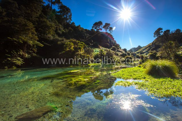 Nina Beilby Photography - Sydney, Australia: Blue Spring Te Waihou Walkway - No Longer A Secret...