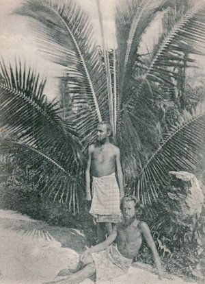 August Engelhardt stands underneath a palm tree with Berlin concert pianist Max Lützow at his feet. Lützow went to Kabakon to join Engelhardt's sun-worshipping cocovore cult, where the only food eaten was, well, coconut. He died there, as did several other followers. It turns out living on a diet of only coconut is a terrible, terrible idea.