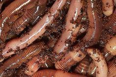 How to Keep Night Crawlers Alive | eHow