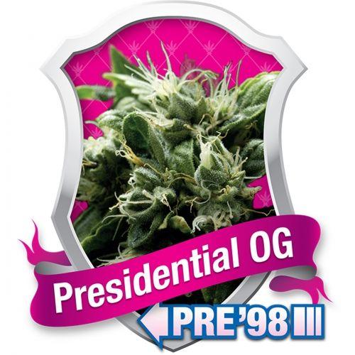 Presidential OG est un excellent exemplaire de la nouvelle école de génétiques Kush, même s'il n'est pas aussi fort que certaines autres variétés Kush, comme notre OG Kush. Sa génétique est presque purement Indica, bien qu'elle ait l'effet d'un agréable équilibre de stone et high. Presidential OG est fantastique à fumer et il s'agit d'une excellente plante pour tous les types de cultivateurs.