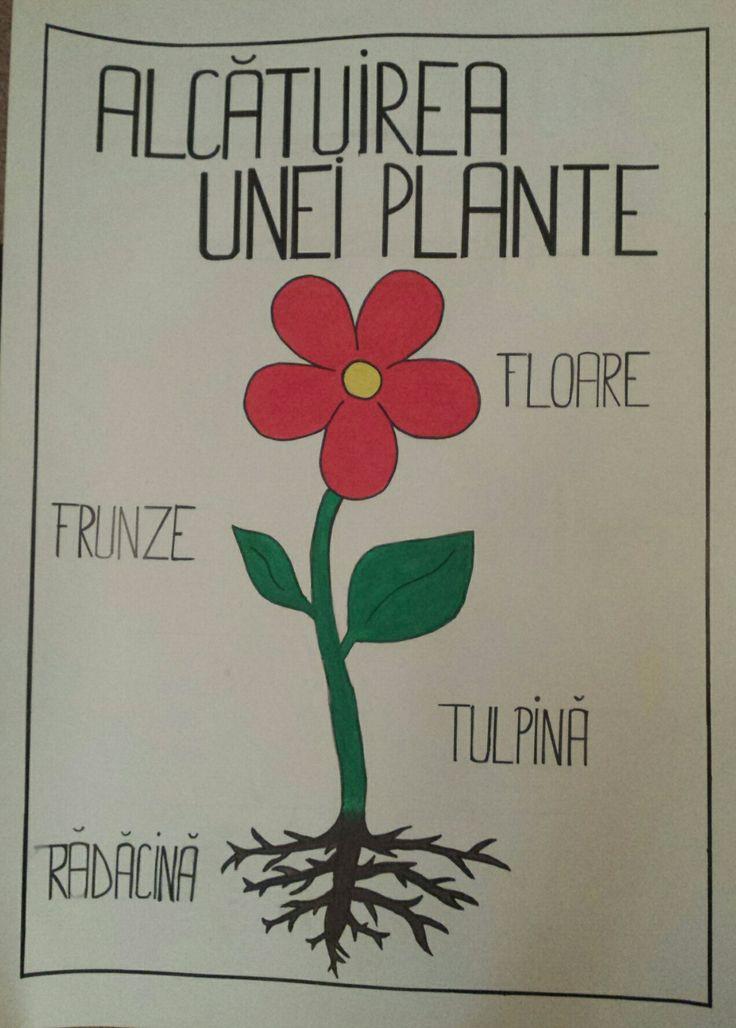 Alcătuirea unei plante