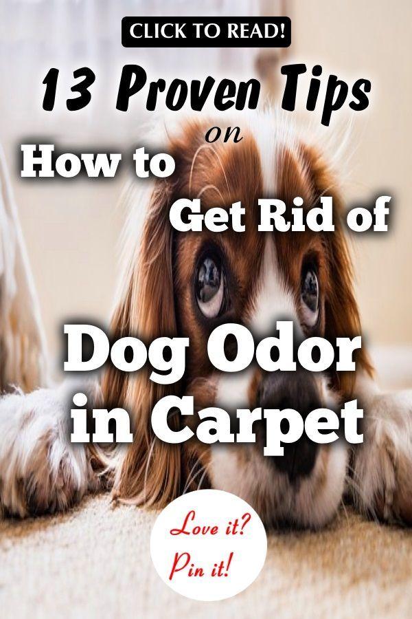 How To Get Rid Of Dog Odor In Carpet 13 Tips That Work Dog Odor Dog Smells Pet Smell