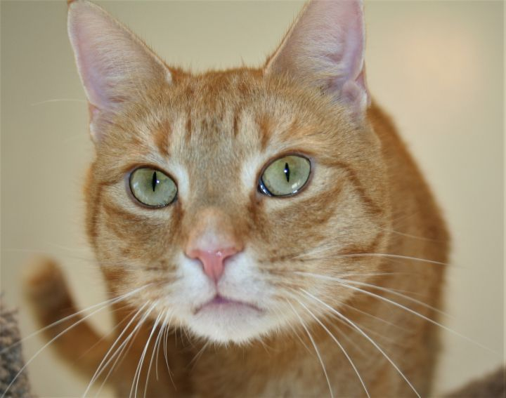 Adopt Barnaby On Cat Adoption Animal Companions Help Homeless Pets
