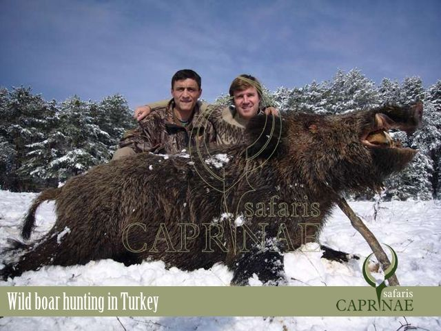Wild boar hunting in Turkey http://riflescopescenter.com/category/bsa-riflescope-reviews/