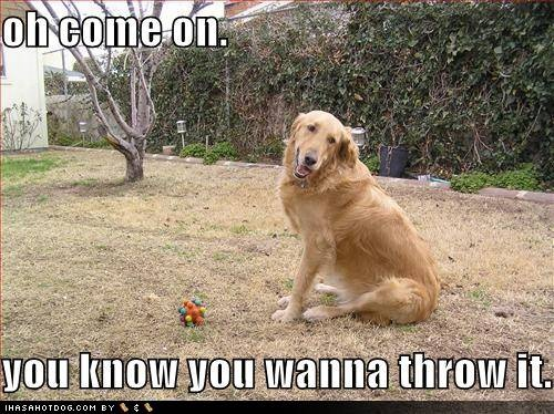 funny pictures of golden retrievers google search ecards fun pinterest tier. Black Bedroom Furniture Sets. Home Design Ideas