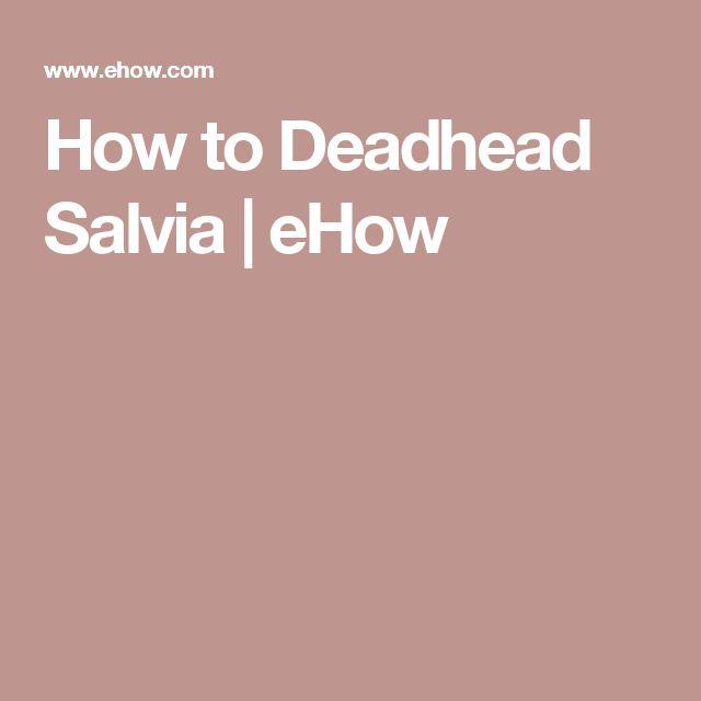 How to Deadhead Salvia | eHow