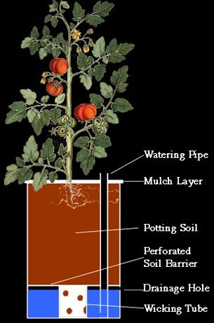 » How To Make A Self Watering Container - Homestead Survivalist